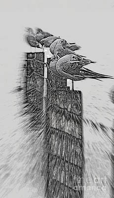 Gulls In Pencil Effect Art Print by Linsey Williams