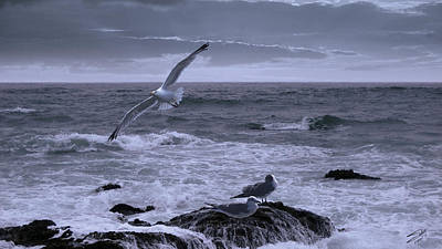 Digital Art - Gulls In Stormy Surf by IM Spadecaller