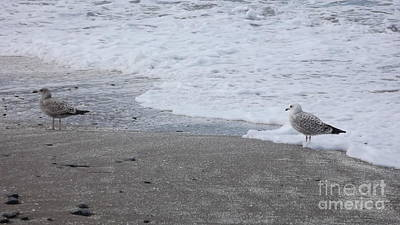 Photograph - Gulls In The Surf by John Williams