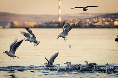 Flying Seagull Photograph - Gulls by Jelena Jovanovic