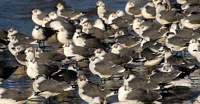 Photograph - Gulls by Kirk Stanley