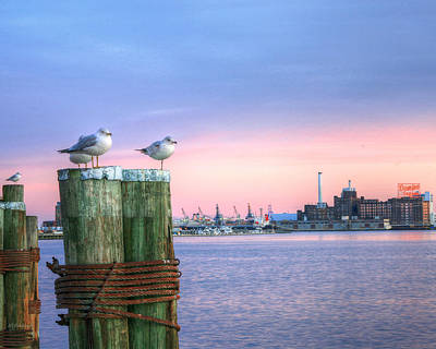 Baltimore Md Photograph - Gull's Night Out by JC Findley