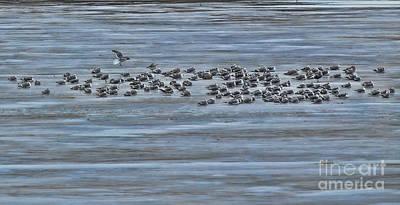 Photograph - Gulls On Ice by Elizabeth Winter