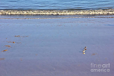 Photograph - Gulls On The Beach by Jeremy Hayden