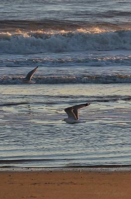 Photograph - Gulls On The Wing At Sunrise by Robert Banach