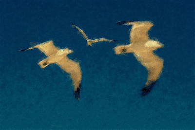 Kim Fearheiley Photography - Gulls Pastel Chalk by David Lange