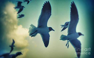 Photograph - Gulls by Paulo Guimaraes