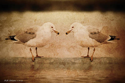 Photograph - Gulls by WB Johnston
