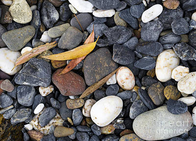 Photograph - Gum Leaves And Rocks by Steven Ralser