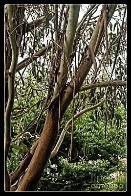 Digital Art - Gum Tree In Grunge by Fran Woods