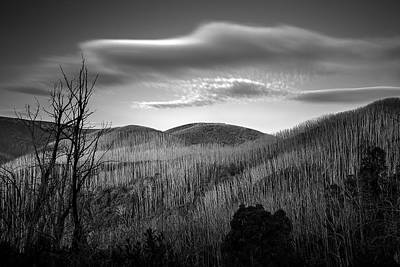 Country Snow Photograph - Gums Of Grey by Mark Lucey