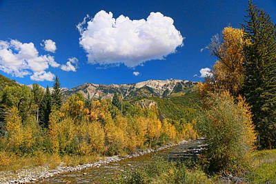 Photograph - Gunnison National Forest by Allen Beatty