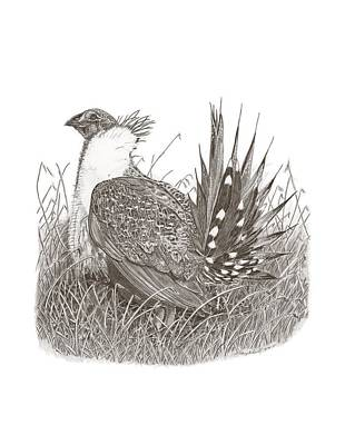 Sage grouse drawing - photo#34
