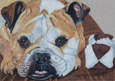 Drawing - Gus - English Bulldog Commission by Anita Putman