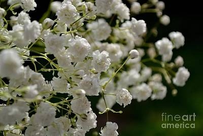 Photograph - Gypsophilia by Scott Lyons