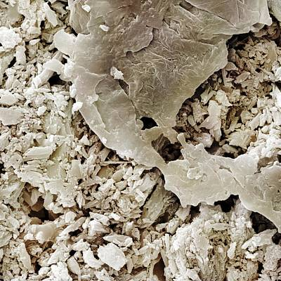 Gypsum Crystals Sem Art Print by Science Photo Library
