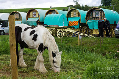 Gypsy Wagon Photograph - Gypsy Cob And Wagons by Liz  Alderdice