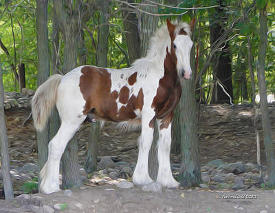 Gypsy Vanner Digital Art - Gypsy Foal In The Woods by Feathered Gold Stables