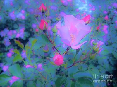 Gypsy Rose - Flora - Garden Art Print by Susan Carella