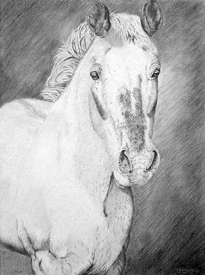 Farm Stand Drawing - Gypsy by Wendi Curtis