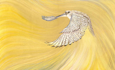 Falcon Drawing - Gyrfalcon Gliding Into The Light by Robin Aisha Landsong