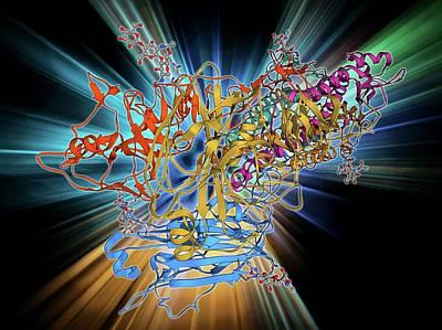 H5n1 Haemagglutinin Protein Subunit Art Print by Laguna Design