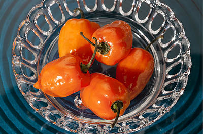 Photograph - Habanero Peppers On Glass by Gary Silverstein