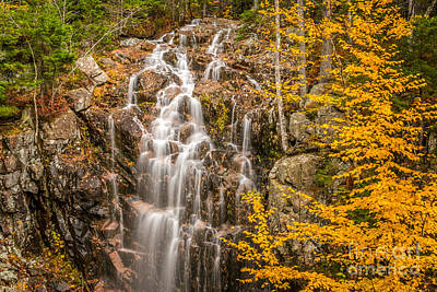 Photograph - Hadlock Fall In Acadia by Susan Cole Kelly