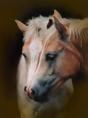 Digital Art - Haflinger Foal Friends by Posey Clements