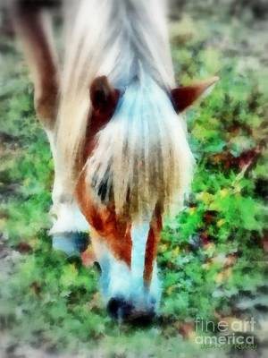 Photograph - Haflinger Pony Graze  by Janine Riley