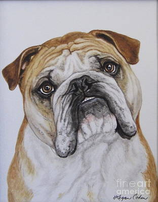 Dog Painting - Haggan by Megan Cohen