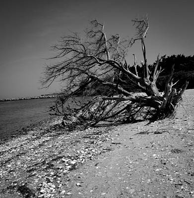 Photograph - Haggard Tree by Bonnie Leigh Delar