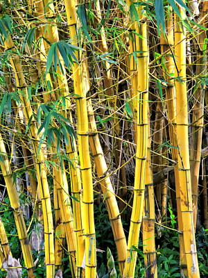Photograph - Haiku Bamboo 3 by Dawn Eshelman