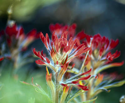 Photograph - Hair Of The Paintbrush by Eric Rundle