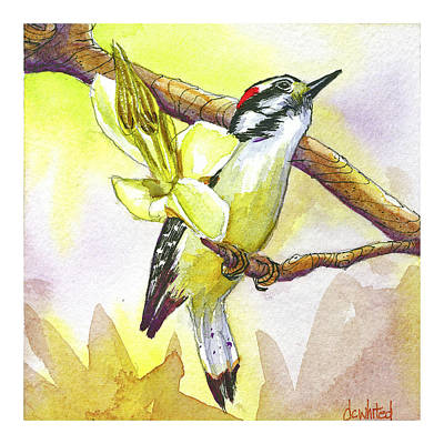 Hairy Woodpecker Original by Dave Whited