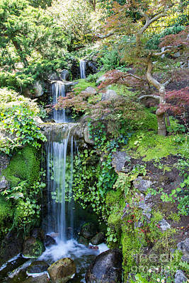 Photograph - Hakone Waterfall by Suzanne Luft