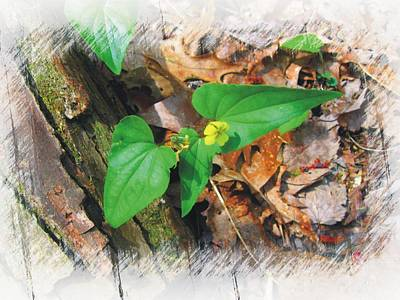 Photograph - Halberd Leaf Violet by Joe Duket