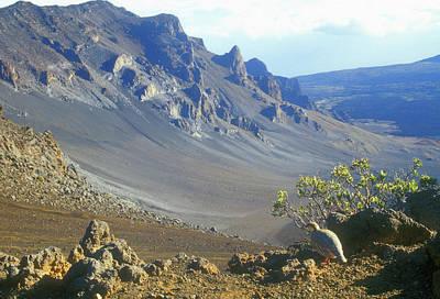 Photograph - Haleakala Volcano And Chukar Maui Hawaii by John Burk