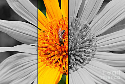 Wild Sunflowers Digital Art - Half And Half by Clare Bevan