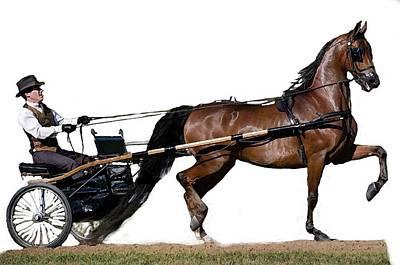 Half Arabian Pleasure Driving Horse  Art Print by Olde Time  Mercantile