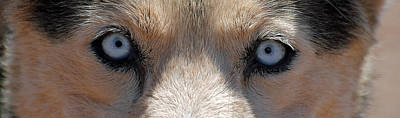 Photograph - Half Breed 3 by Jeff Brunton