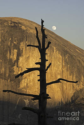 Art Print featuring the photograph Half Dome With Full Moon by Judi Baker