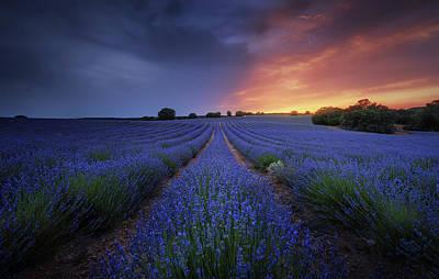 Purple Flowers Photograph - Half Life. by Juan Pablo De