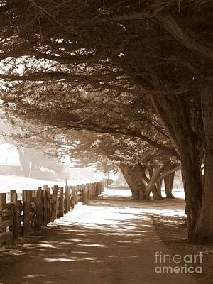 Photograph - Half Moon Bay Pathway by Carol Groenen