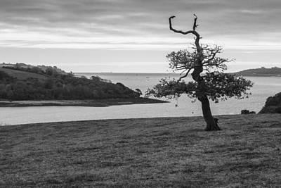 Photograph - Half Naked Tree by Brian Roscorla