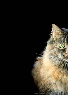 Photograph - Half Of A Cat by Renee Trenholm
