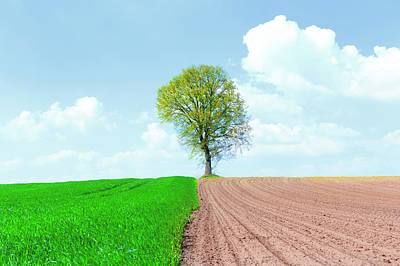 Ploughed Photograph - Half Ploughed Wheat Field With A Tree by Wladimir Bulgar