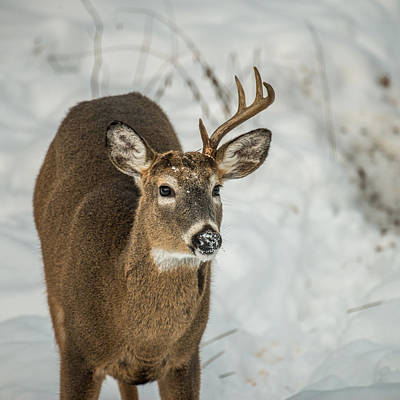 Trophy Buck Photograph - Half Rack by Paul Freidlund