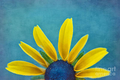Black Eyed Susan Photograph - Half Sun - S03dt01a by Variance Collections