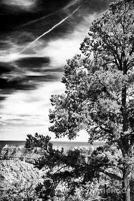Half Tree Art Print by John Rizzuto